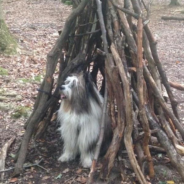 Henok spielt Verstecken im Wald