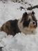 Henok im Schnee