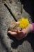 Blume erwächst aus dem Stein