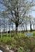 Bettbeet vorm blühenden Kirschbaum