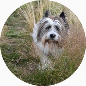 Als Hofhund streife ich gern durchs Gras!